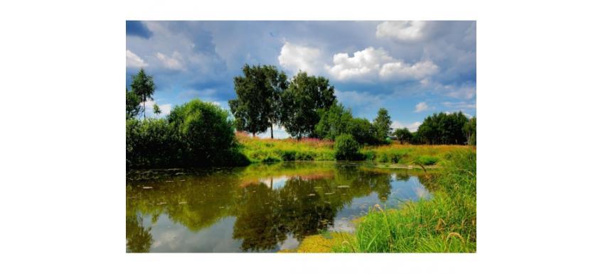 Сколько стоит гектар земли?